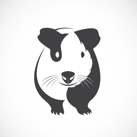 guinea: Vector of guinea pig design on white background.