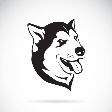 siberian husky: Vector of a dog siberian husky on white background.