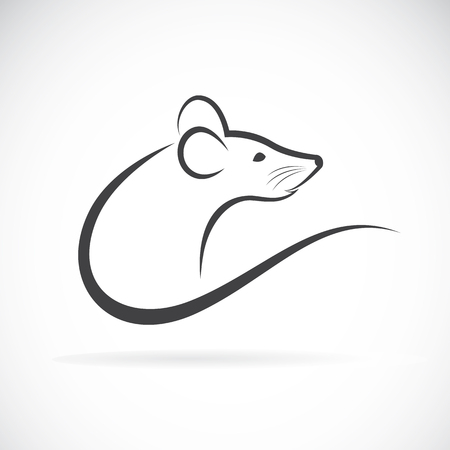Vector of a rat design on a white background. 向量圖像