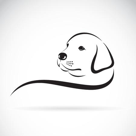 labrador: Vector of a dog labrador head on a white background.