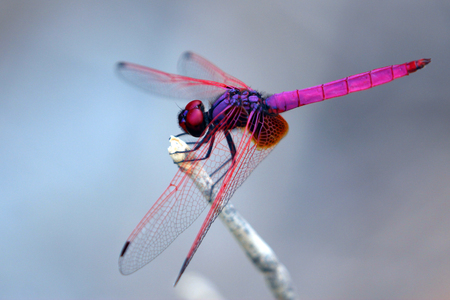 Image of dragonfly perched on a tree branch Stock Photo