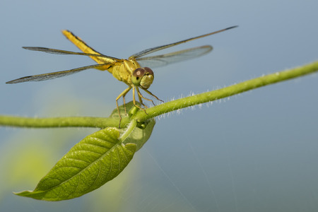 Image of dragonfly perched on a green leaf