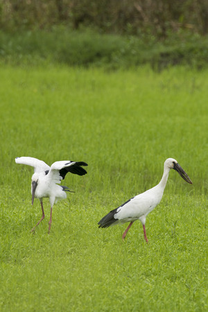 Image of stork on nature background Stock Photo
