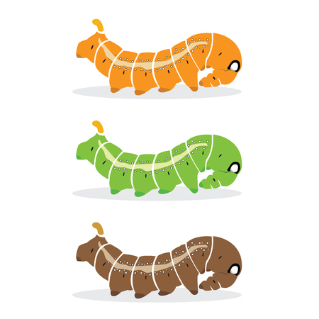 pupa: caterpillar on white background.