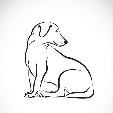 Labrador psa na białym tle