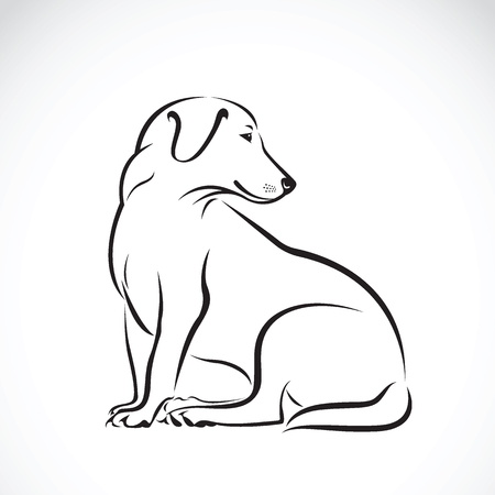 dog labrador on white background