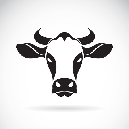 cow head: cow head on white background.