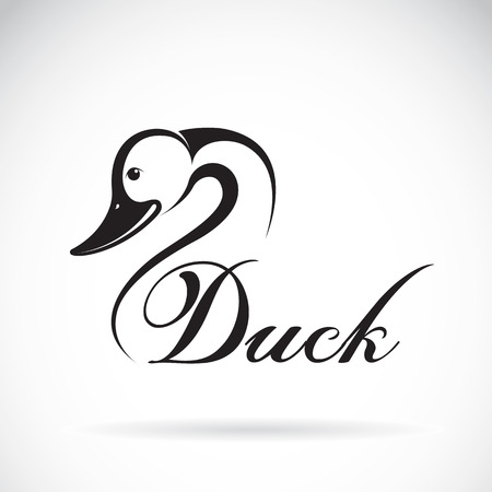 domestic duck: Duck design on a white background. Illustration