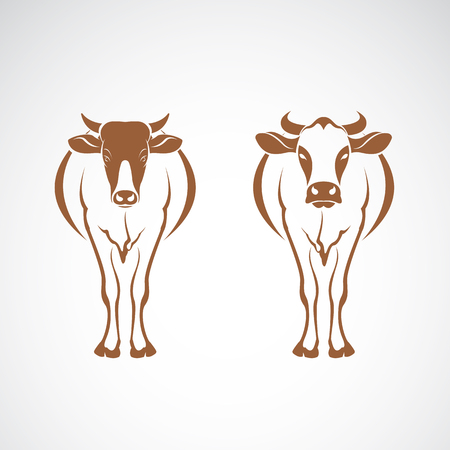 two cow on white background. Animal design.