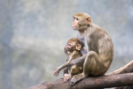 Imagen del mono de la madre y el bebé mono sentado en una rama de árbol.