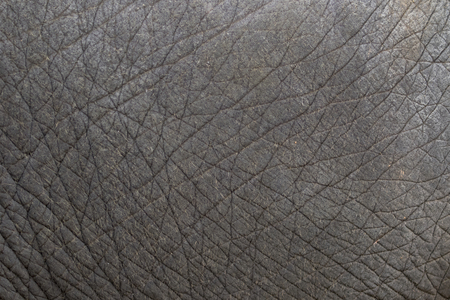 close-up of elephant skin texture abstract background. Banco de Imagens
