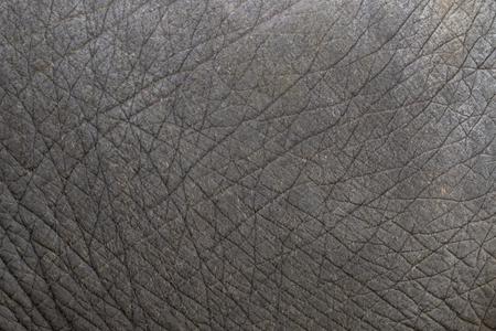 Primer plano de la textura de la piel de elefante extracto fondo. Foto de archivo - 66203030