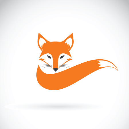 tail: Vector image of a fox design on a white background, Wild Animals