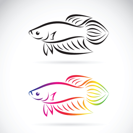 fighting fish: Vector image of a fighting fish design on a white background, Animal Logo. Pet