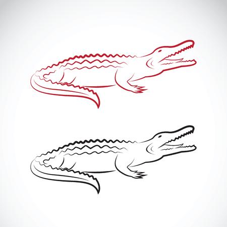 alligators: Vector of crocodile design on white background. Wild Animals.