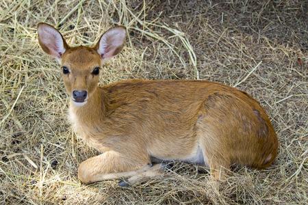 cervus: Image of a deer on nature background. wild animals.