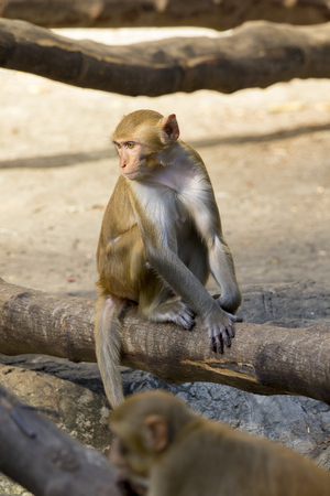 agape: Image of monkey sitting on a tree branch. Stock Photo