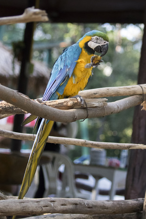 Image of a parrot marcos on nature background in thailand. Wild Animals. Stock Photo