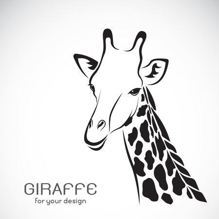 Vector of a giraffe head on white background, Wild Animals. Illustration
