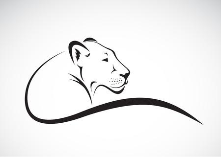 on white: Vector of a lion female design on white background, Wild Animals.