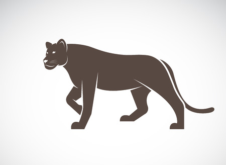 Vector of a lion female on white background, Wild Animals. Illustration