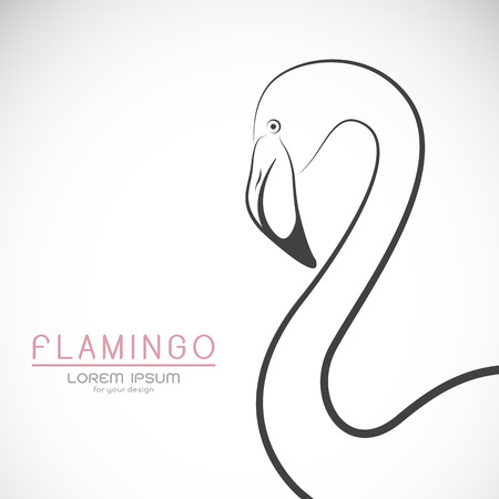 pink flamingo: Vector of a flamingo design on white background, Wild Animals.