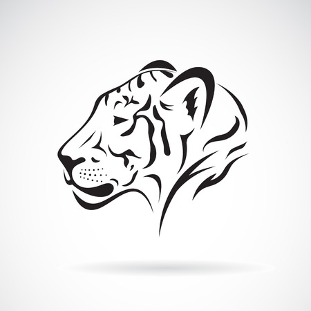 tigress: Vector of a tiger head on white background. Wild Animals Illustration