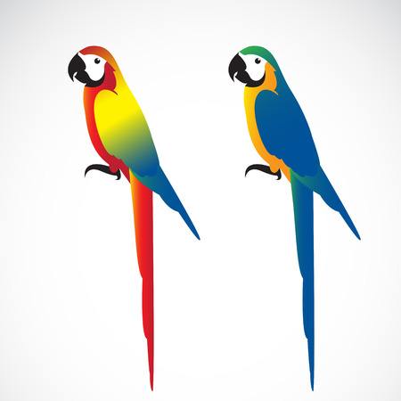 Vector of a parrot (Macaws) on white background. Wild Animals. Illustration