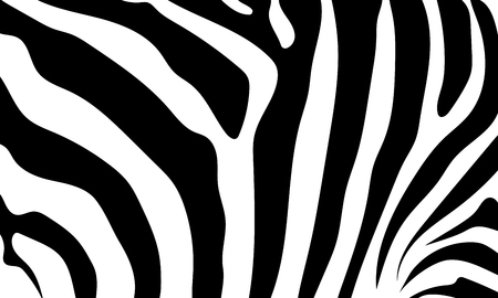 skin color: Abstract background skin of a zebra, white and black color. Wild Animals.