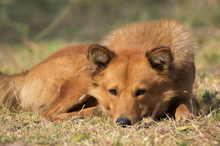 Image of brown dog on nature background. Pet. Stock Photo