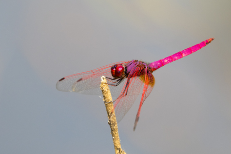 mage of dragonfly perched on a tree branch on nature background. Insect Animals. Stock Photo