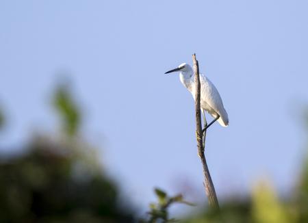 Image of egret on branch on sky background. Wild Animals. Heron. Stock Photo