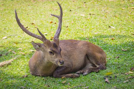 Imagen de un ciervo en el fondo la naturaleza. animales salvajes.