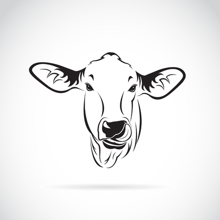 Vector of a cow head on white background., Calf Illustration