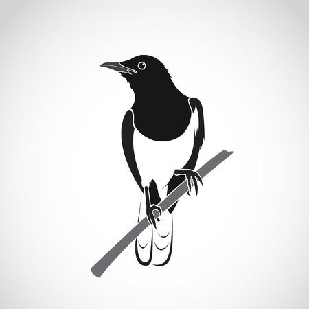 Vektor von Vogel auf weißem Hintergrund. Orientalische Elster Robin (Copsychus saularis)