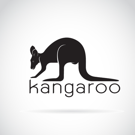 decorative lines: Vector of a kangaroo on white background. Wild Animals.