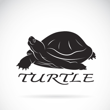 Vector of a turtle on white layout. Illustration