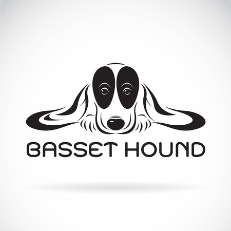 sniffer: Vector of basset hound dog on a white background. Pet Animals
