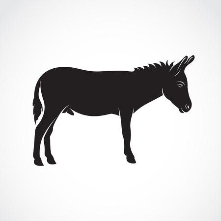 Vector of a donkey on white background. Wild Animals. Illustration