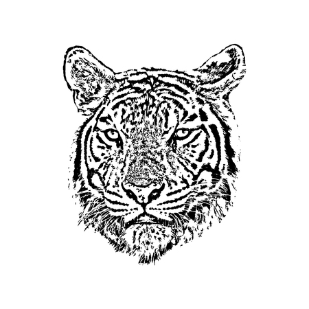 Vector of a tiger face on white background. Wild Animals. Illustration