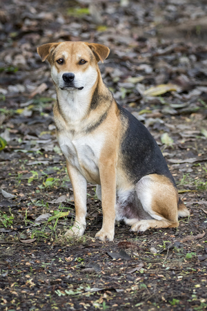 dientes sucios: Imagen de un perro en el fondo de la naturaleza. Mascota. Animal