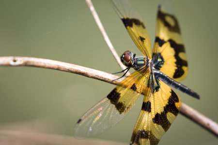 macro flowers: Image of a dragonfly on nature background. Insect Animal