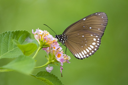 Beautiful butterfly perched on a flower. Insect Animals. Stock Photo