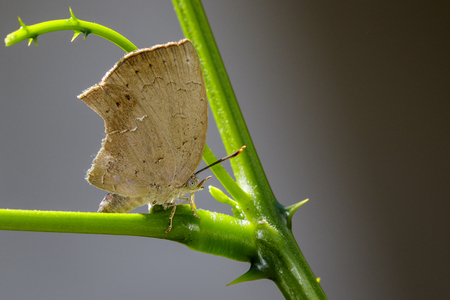 lycaenidae: Image of butterfly (Lycaenidae) on the leaf on nature background. Insect Animal