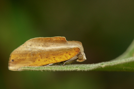 Image of butterfly (Moth) on green leaves. Insect Animal Stock Photo
