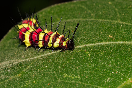 Image of a caterpillar bug on green leaves. Insect Animal Stock Photo