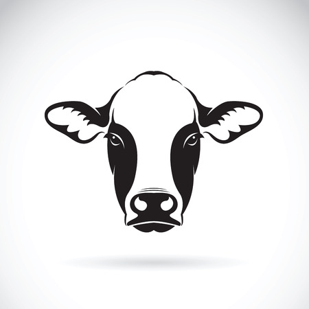 Vector of cow face design on white background. Farm Animal.