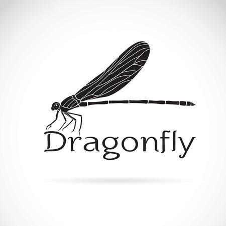 Vector of Vestalis gracilis dragonfly(Amphipterygidae)  on white background. Insect Animal. Illusztráció