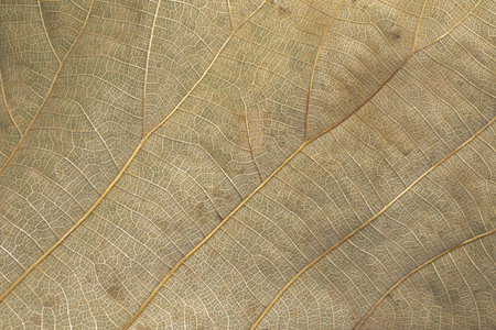Image of background texture of brown leaves are dry for your design.