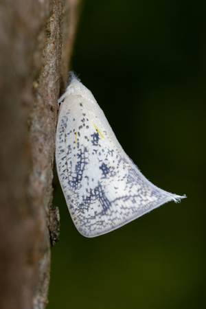 Image of Butterfly Moth (Lasiocampidae) on nature background. Insect Animal